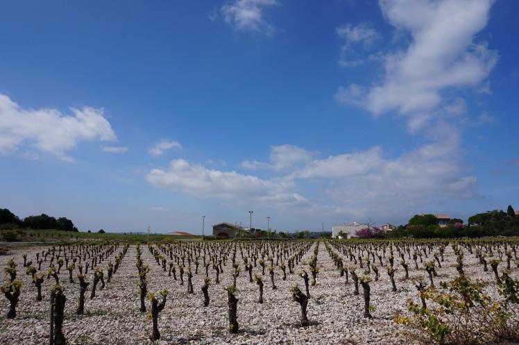 Clos du Gravillas - Minervois - Languedoc